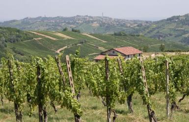 Broni, ,Cellar and Vineyard,For Sale,1014